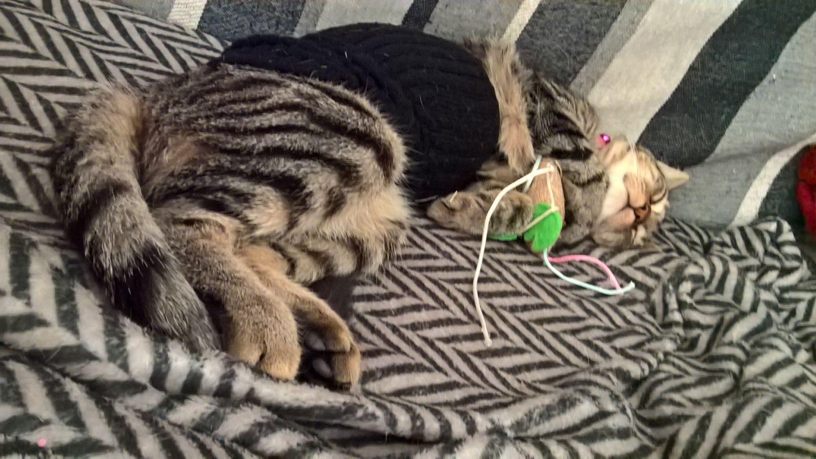 le chat-chaussette ^_^