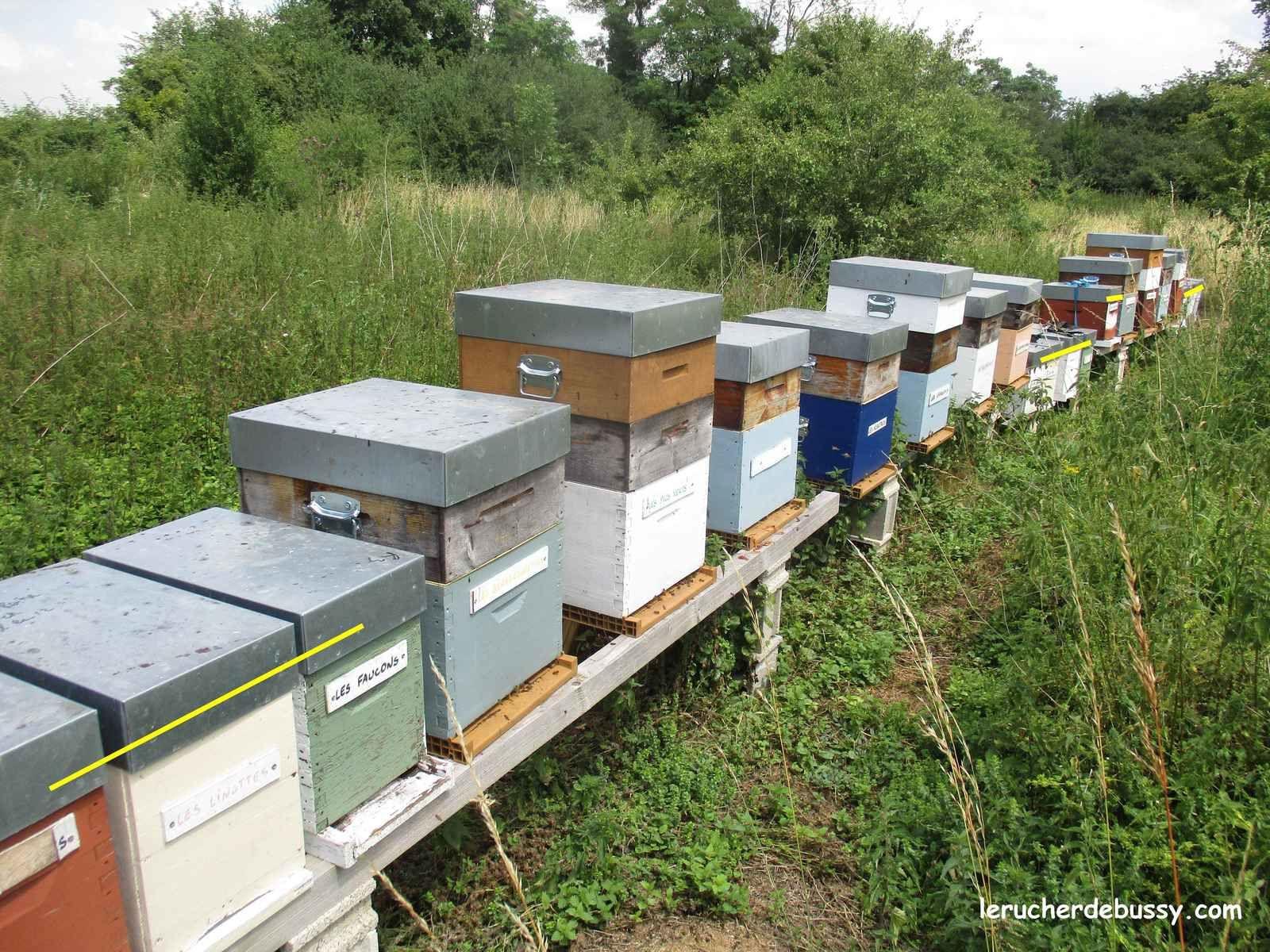 Premier élevage de reines et préparation des essaims sans recherche de reine