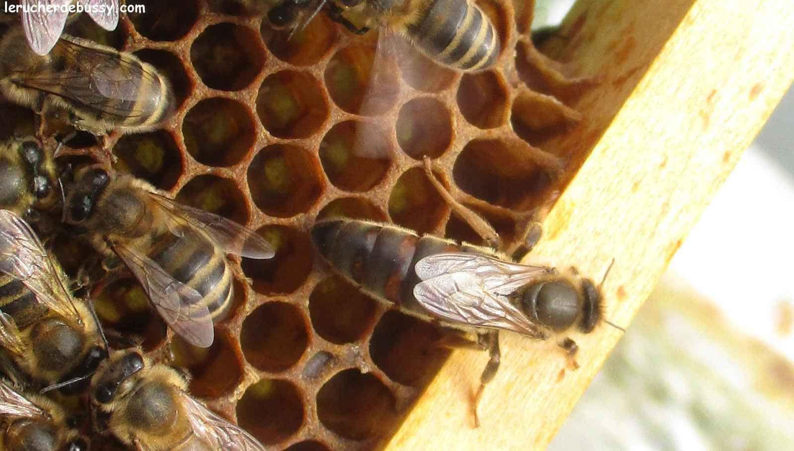 La vie continue dans les ruches...