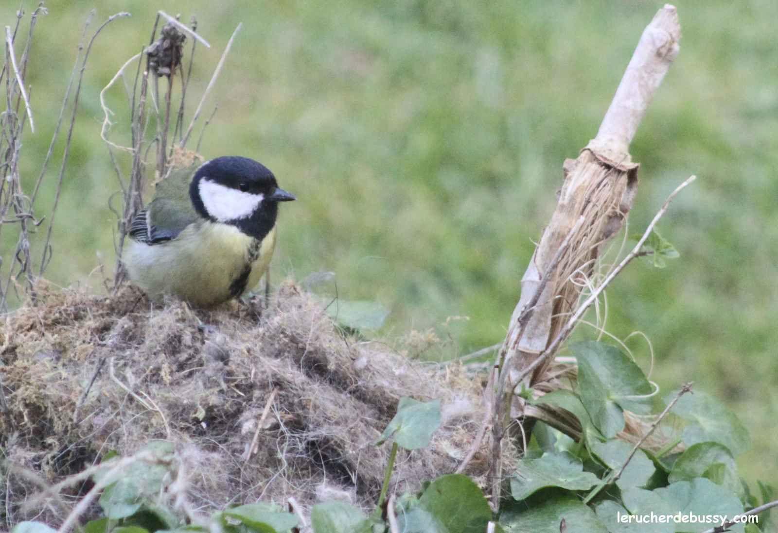 Recyclage d'un nid de mésange ou comment faire du neuf avec du vieux?