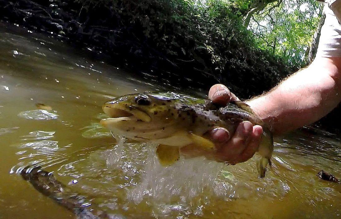 Pêche record dans le Morvan......la tête dans le seau!!!