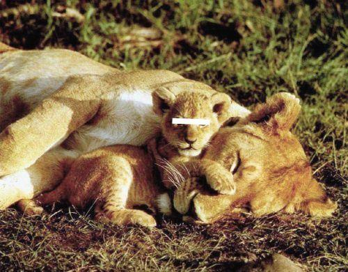 Notre Seigneur a attribué à chaque créature son aspect spécifique puis lui a montré la manière d'agir