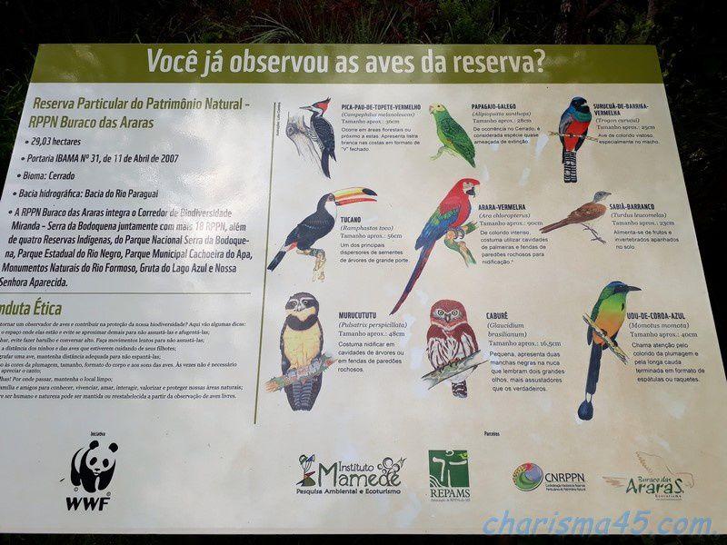 Buraco das araras (Brésil en camping-car)