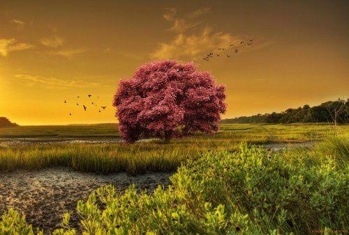 Dire SubhânAllah wa Al Hamdulillah wa Laa ilâha illa Allah wa Allahu Akbar = 4 arbres au paradis!!!