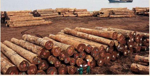Lu pour vous : Filière bois : Rougier dépose le bilan et accuse « l'engorgement du port de Douala » d'avoir causé sa chute
