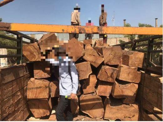 Comment le bois de vène malien est pillé et exporté vers la Chine