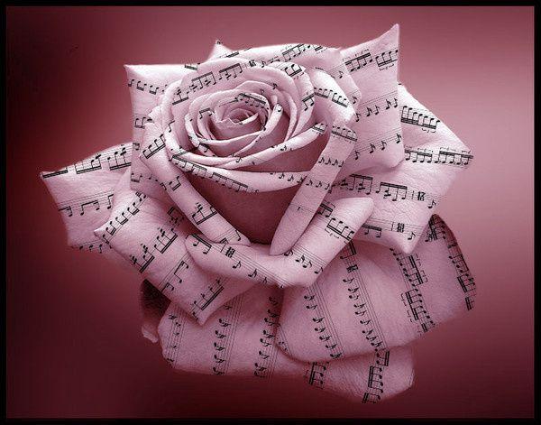 Bonne fête de Sainte Cécile à tous les musiciens et toutes les musiciennes !