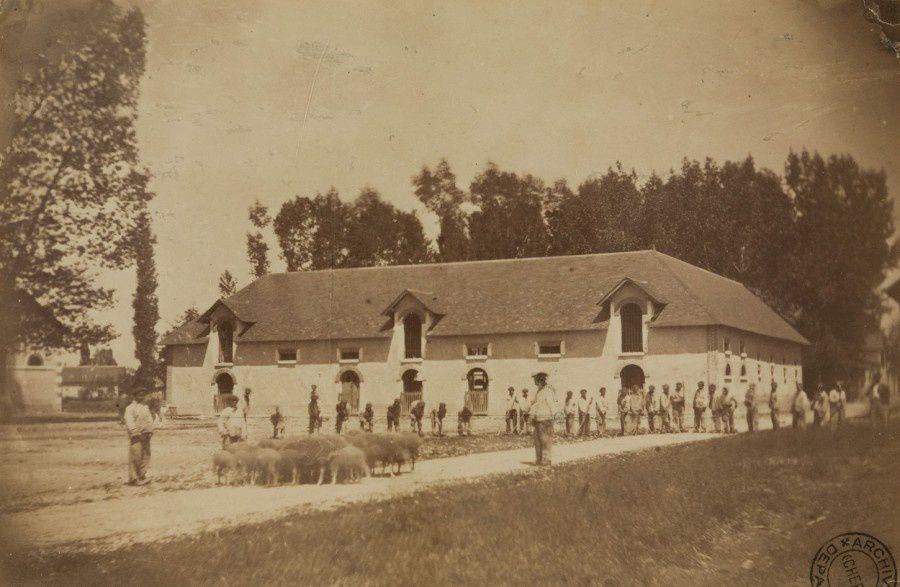 Colons agriculteurs et s'occupant d'un troupeau de moutons - photographie, années 1860, 4 F1 N°4