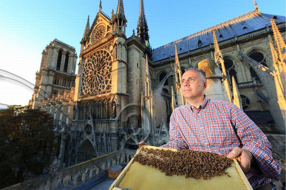LES ABEILLES INSTALLÉES SUR LA SACRISTIE DE ND DE PARIS ONT ÉCHAPPÉ À L'INCENDIE