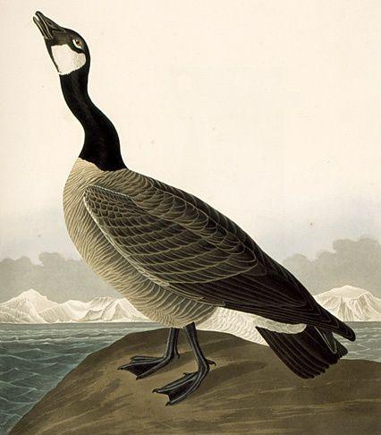Le Peintre Et L Oiseau W O D K A