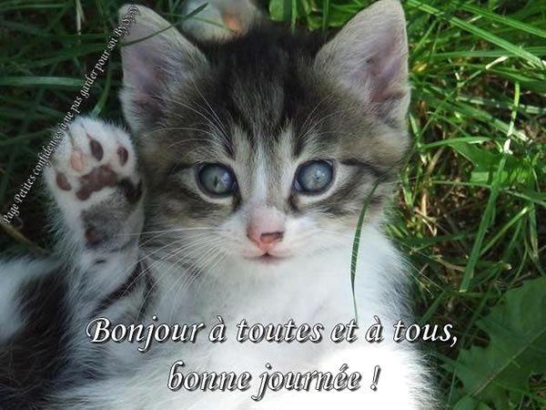 ILS ONT BESOIN DE VOUS SAPHIR,JERRY ET CHOUPETTE!!!
