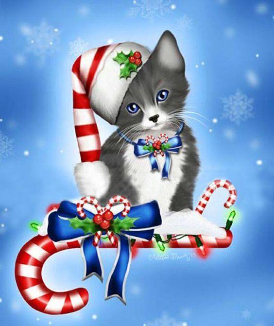 Chat Noël...