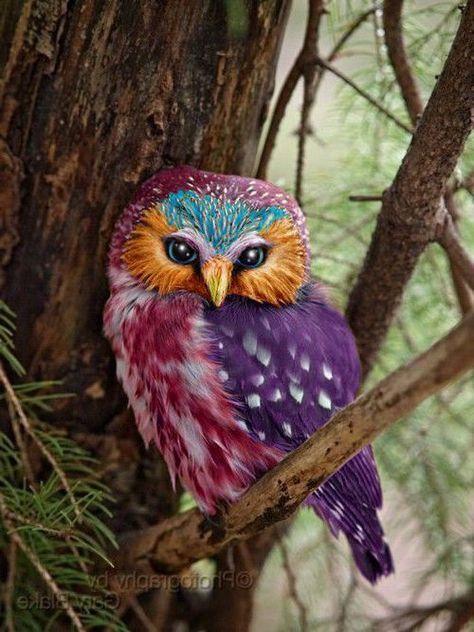 Magnifique oiseaux