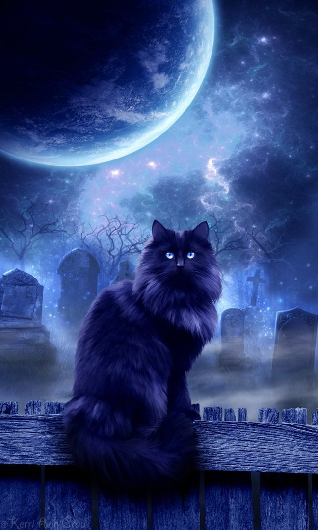 Chat lune...
