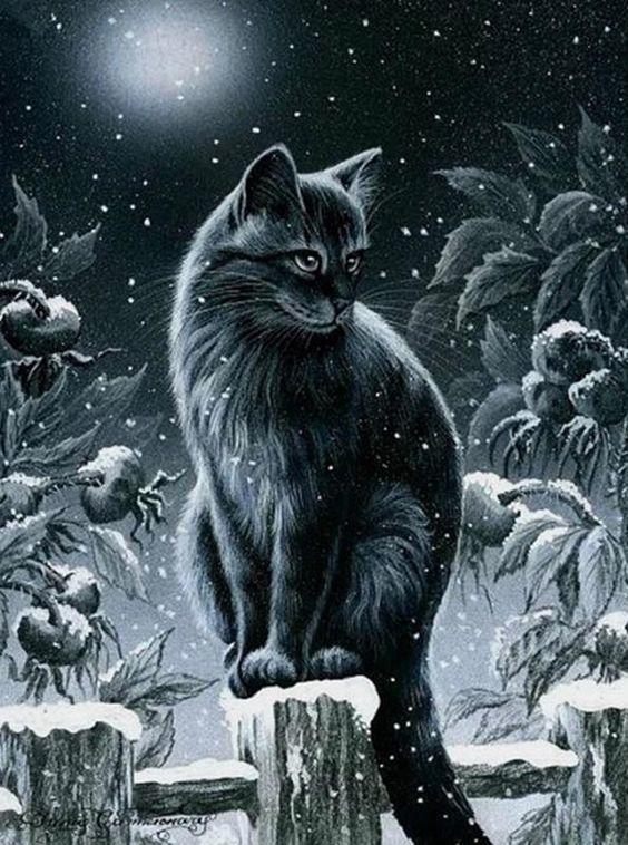Images avec chats dans la neige