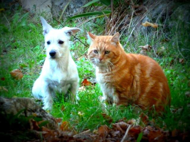 dog cat chien chat