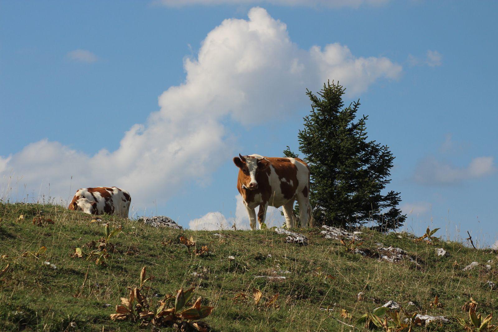 La Sagne ,Tête de Ran ,Mont Racine & la Sagne le 31/08/19