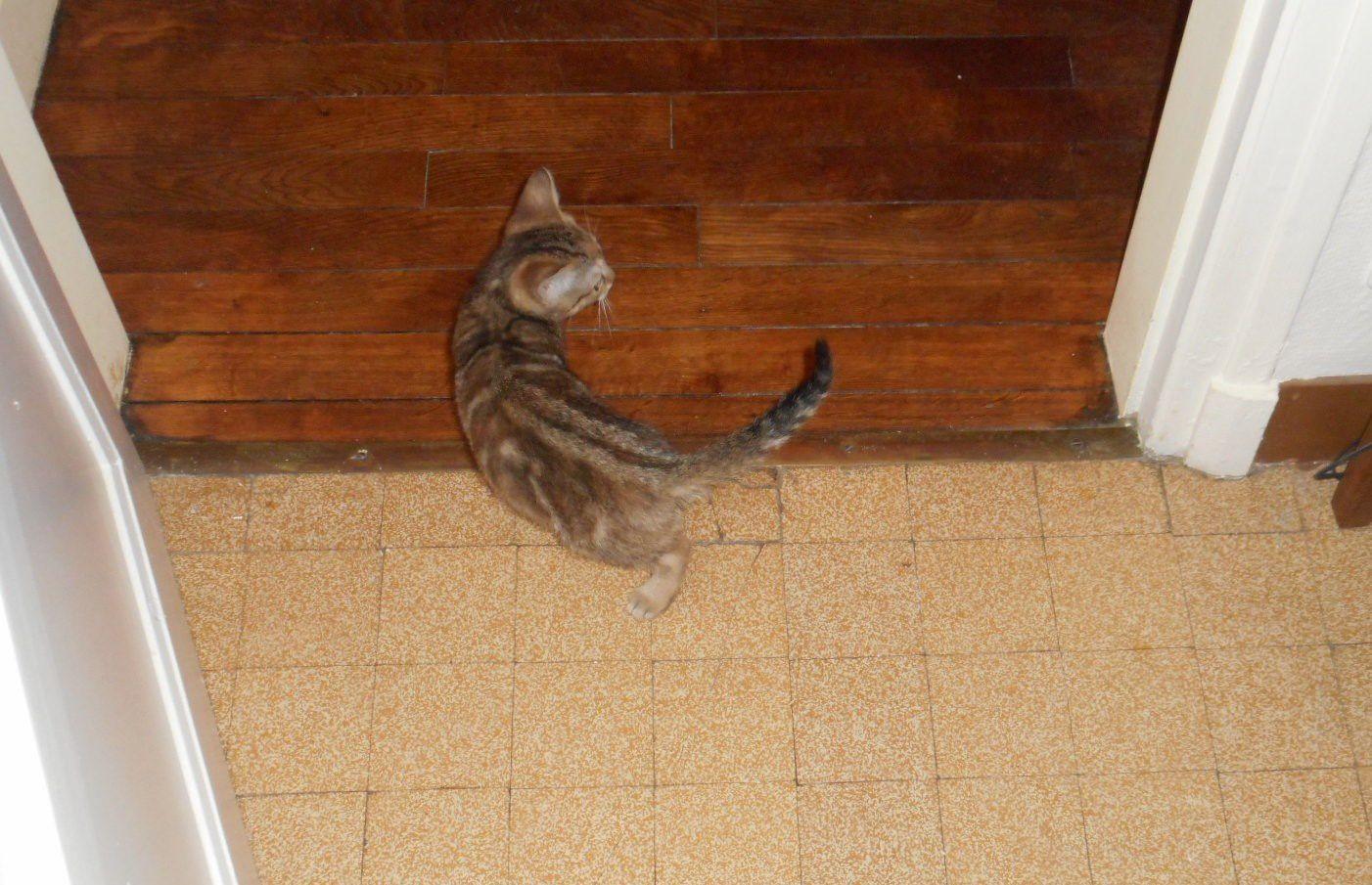 mon chaton de noël