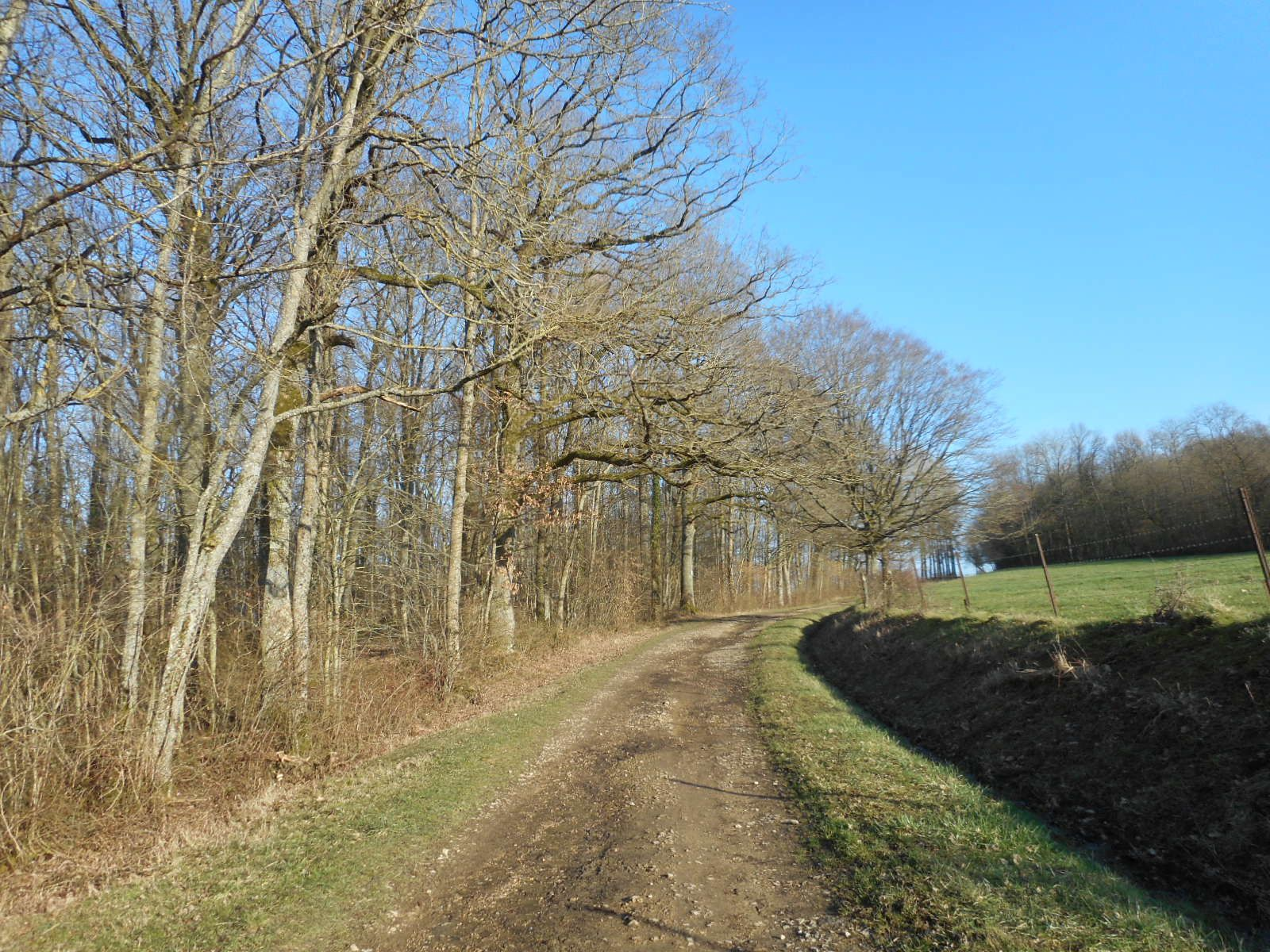 route vers le mont Tilleul. des corbeaux dans les arbres