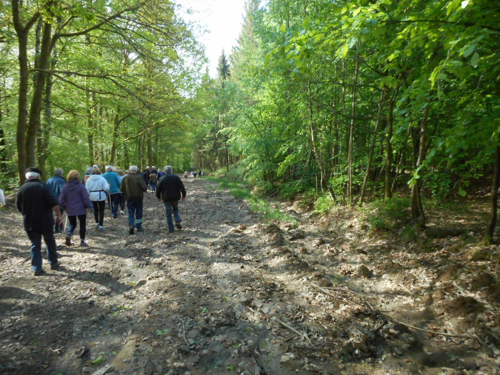 promenade en forêt ardennaise