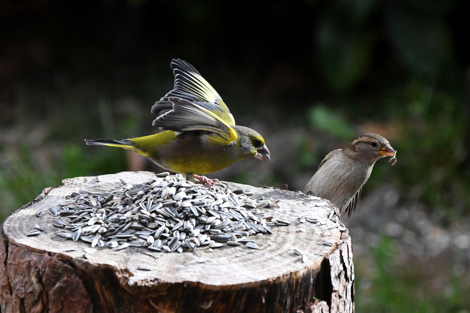 Les oiseaux du jardin en hiver nourrir les oiseaux en for Entretien du jardin en hiver
