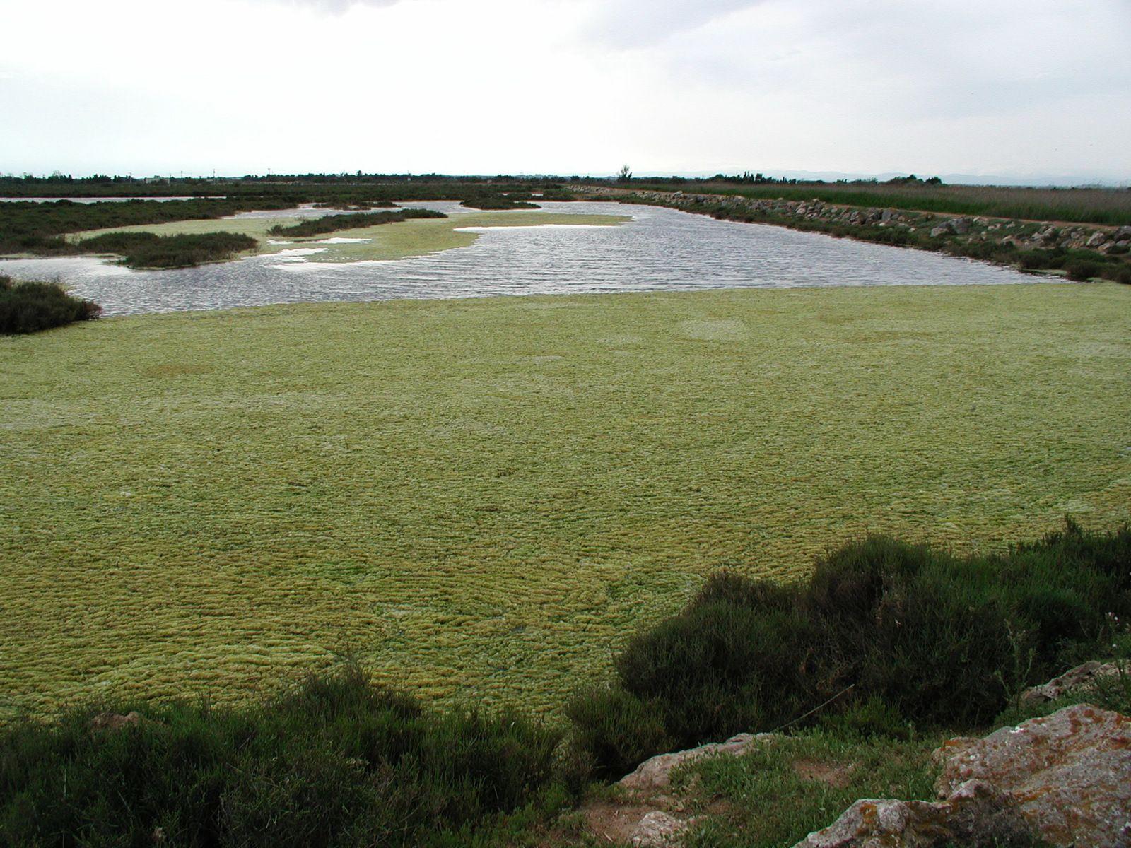 Photos Fcn, 2001 à 2009