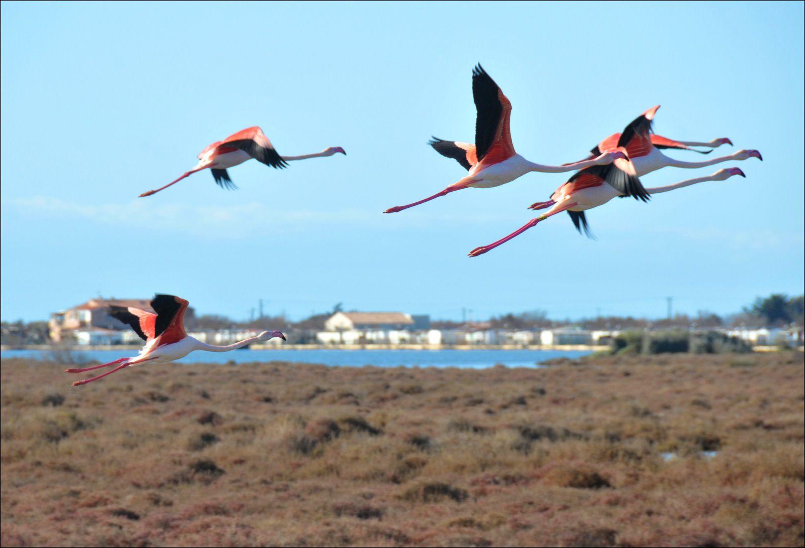 Un environnement exceptionnel !   (Photos Fcn, 2009 2012)