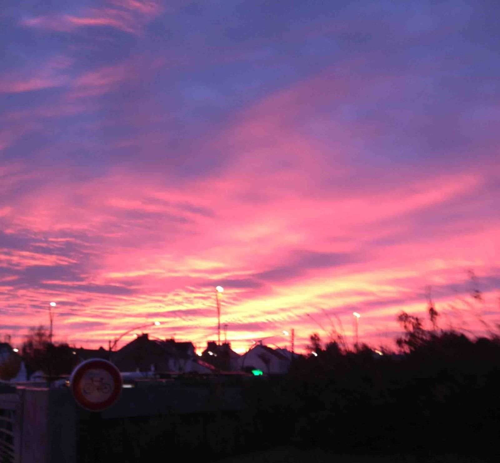 Lundi soleil rose, bernieshoot