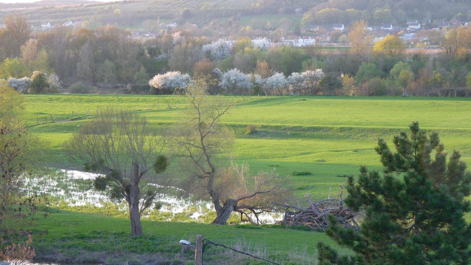 Ancien bras de Seine, aux Damps, qui apparait plus ou moins selon le niveau de l'eau. Les vaches s'y abreuvent comme dans une toile d'Eugène Boudin (clichés Armand Launay, avril 2016).