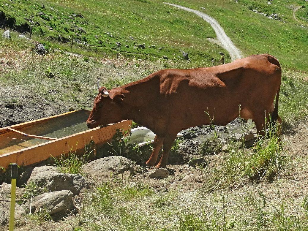 Un nouveau séjour dans les Alpes (suite 3) - Le blog de Pi_ro_94