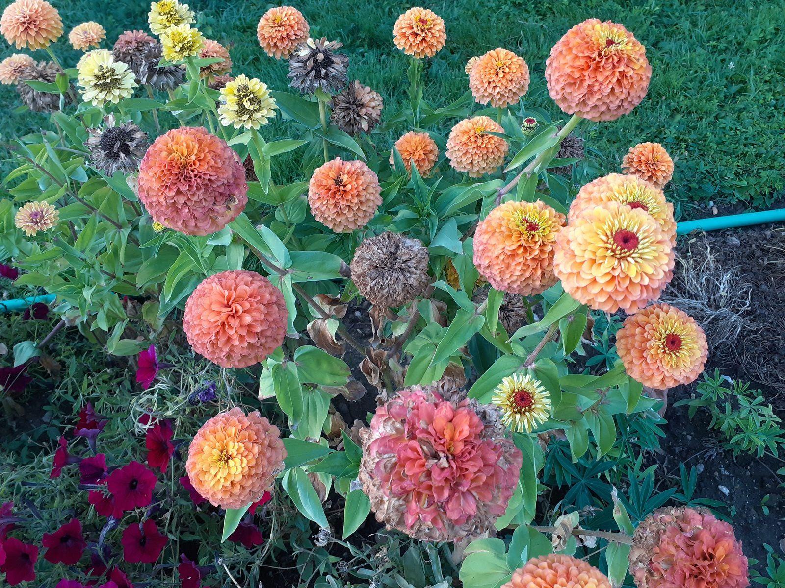 Quelques unes des fleurs rencontrées lors de ma promenade au Jardin des Plantes