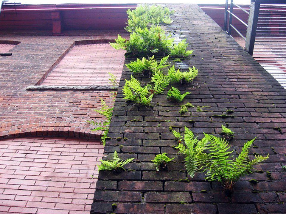 Des plantes qui poussent malgré les constructions des hommes