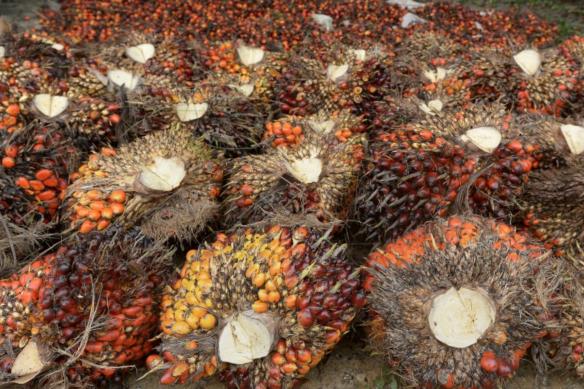 Le débat sur l'huile de palme  ? : un fauxproblème !