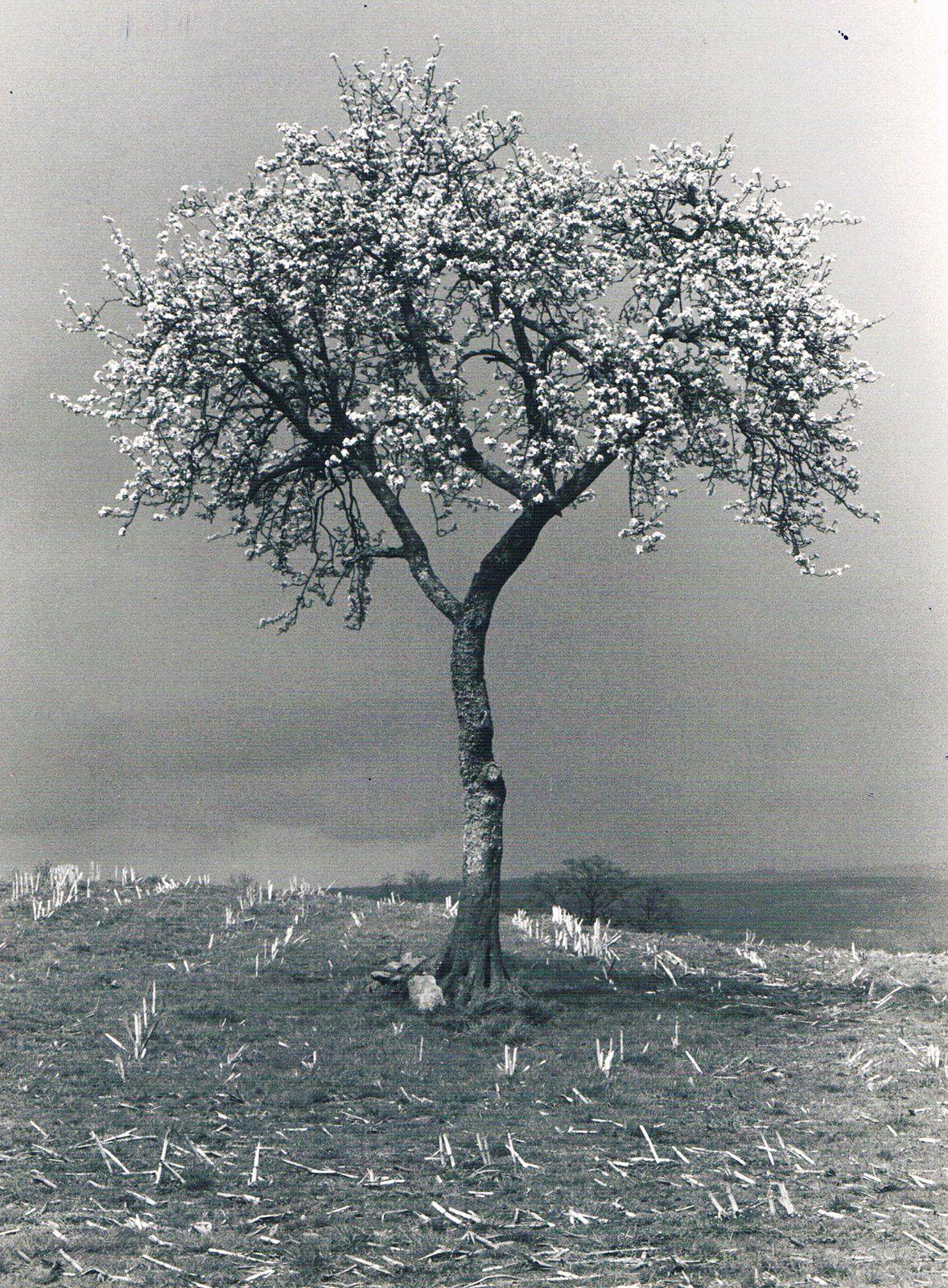 4 à 6- photo : jct / effets spéciaux : flora