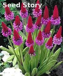 1- photo : flora / 2 à 4- waysidegardens.com