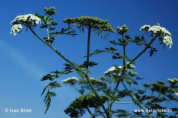 1- canalmidi.com / 2- etsy.com / 3- naturephoto-cz.com / 4- temesso.fr /