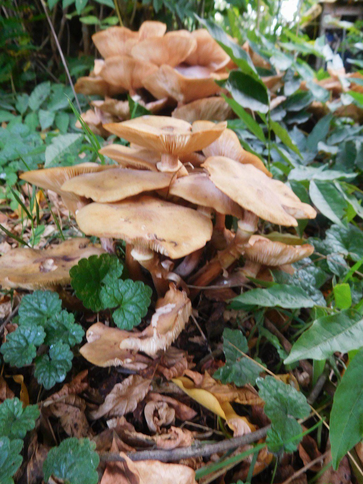 photos 5 à 7 : flora