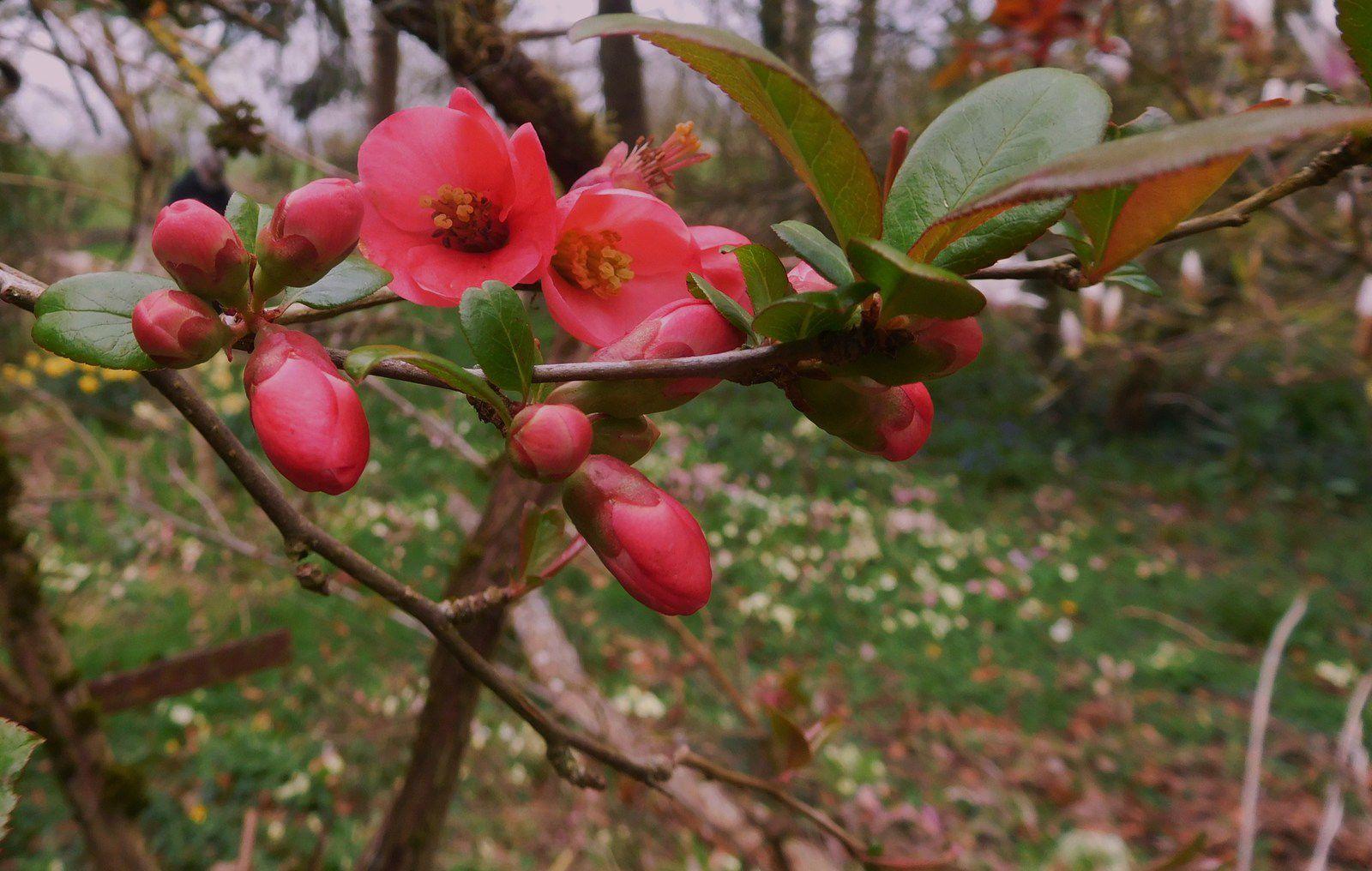 photos : flora