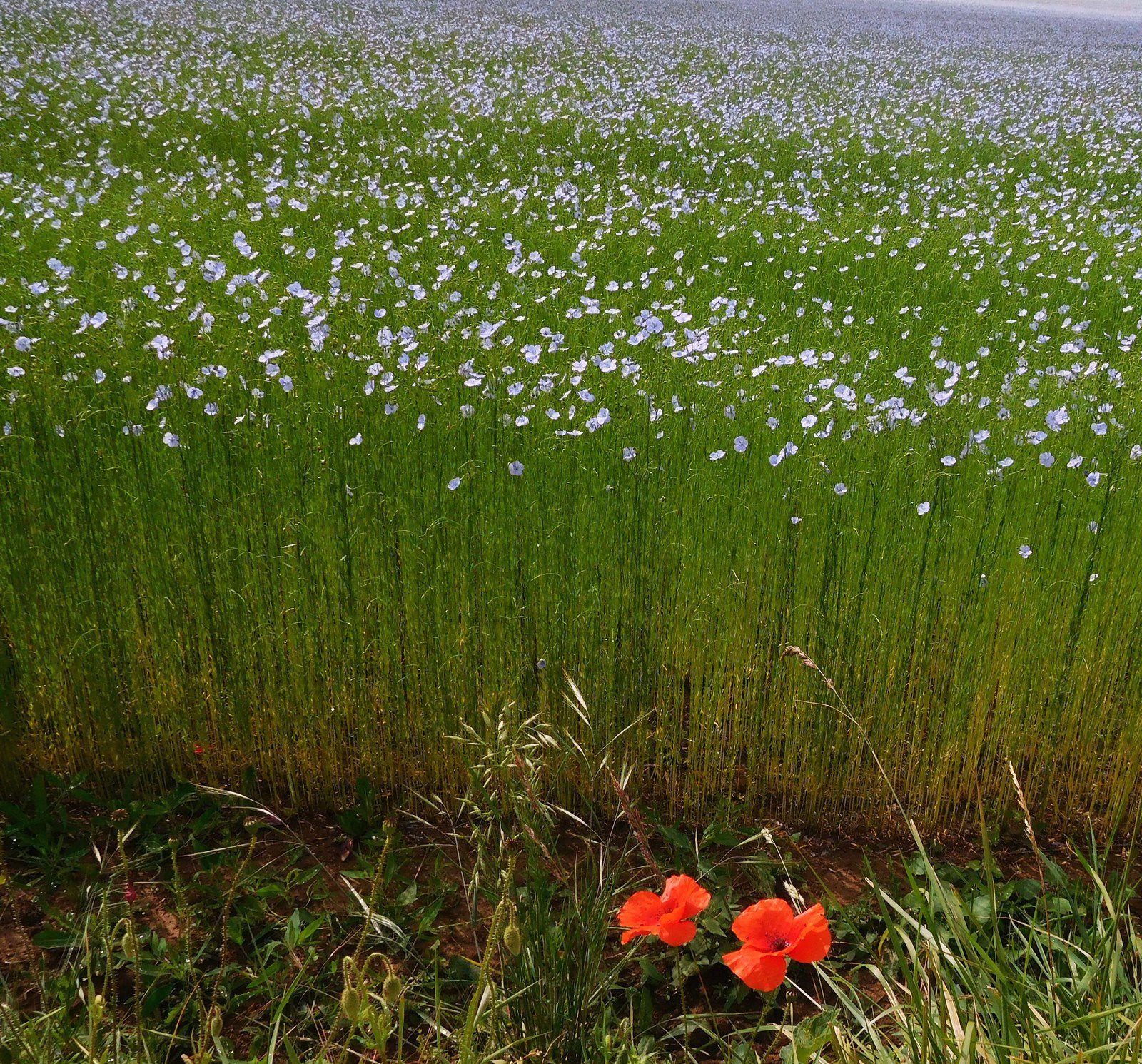 photos 1 à 3 : flora