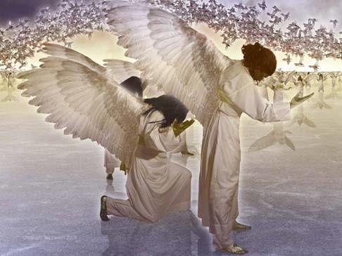 Réponses aux questions : les ailes