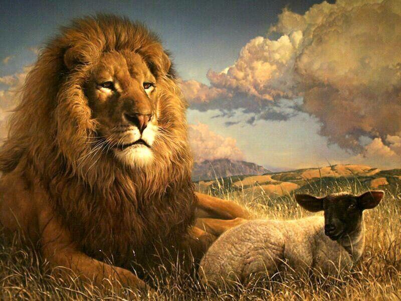 Apocalypse 5:5 Alors l'un des anciens me dit: «Ne pleure pas, car le lion de la tribu de Juda, le rejeton de la racine de David, a vaincu pour ouvrir le livre et ses sept sceaux.»