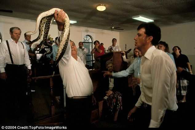 The role of snakes — though they prefer the more Biblical description of 'serpents' — in the Church Of God With Signs Following is rooted in two passages in the Gospels of Mark and Luke in the King James Bible