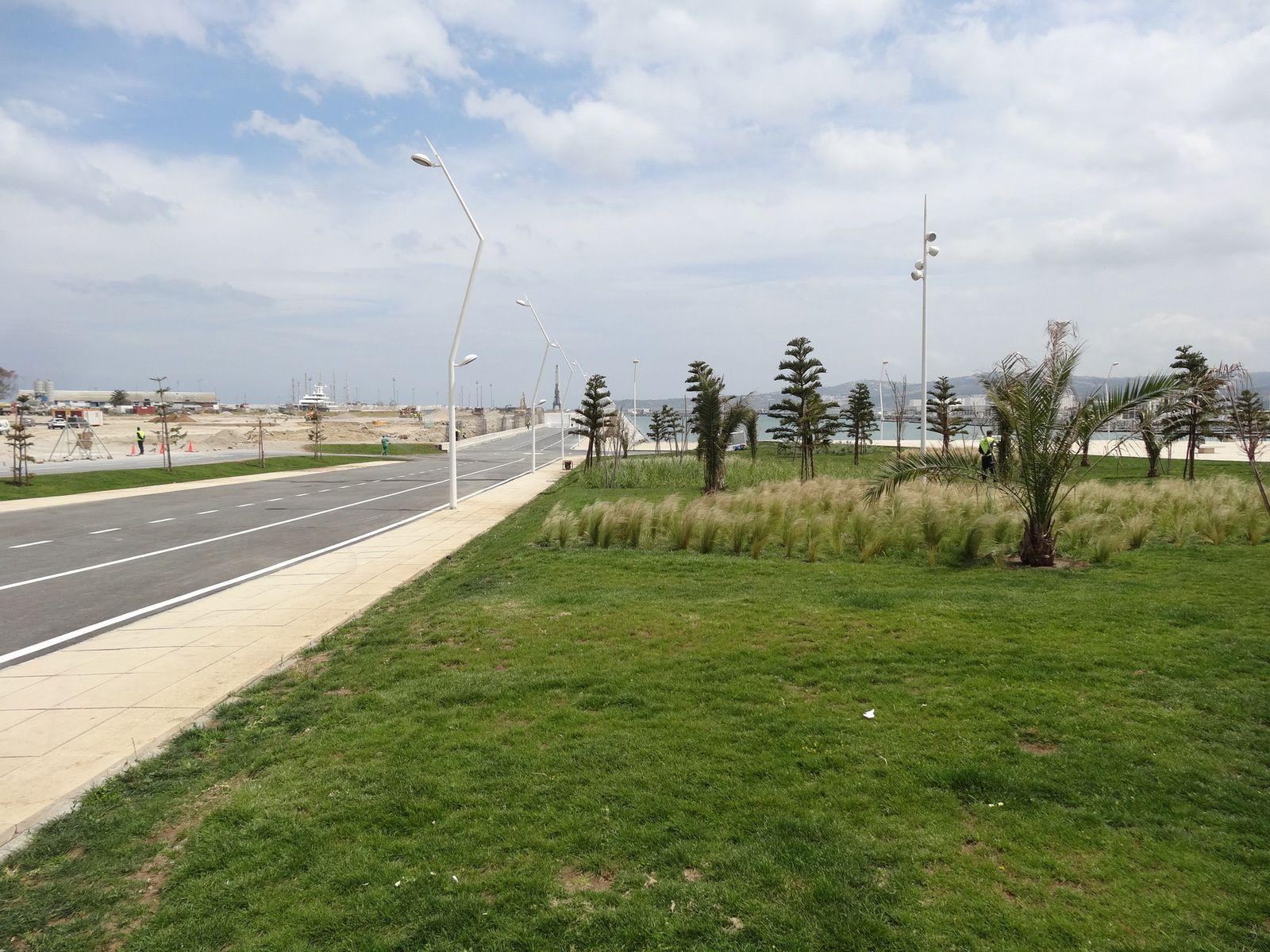 Les plantations de la corniche à Tanger