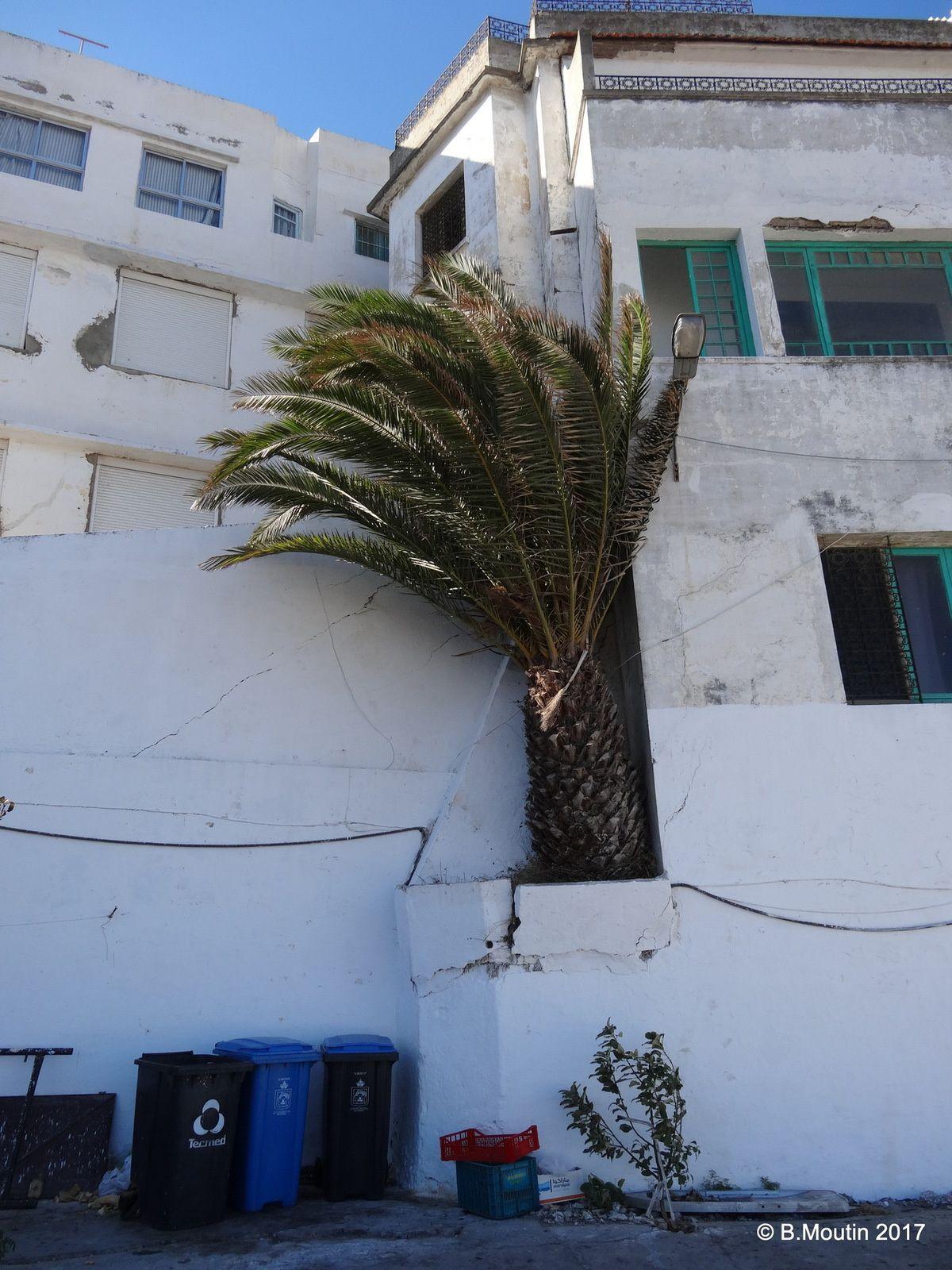 L'Hôtel Continental à Tanger (et son palmier encastré dans le mur)