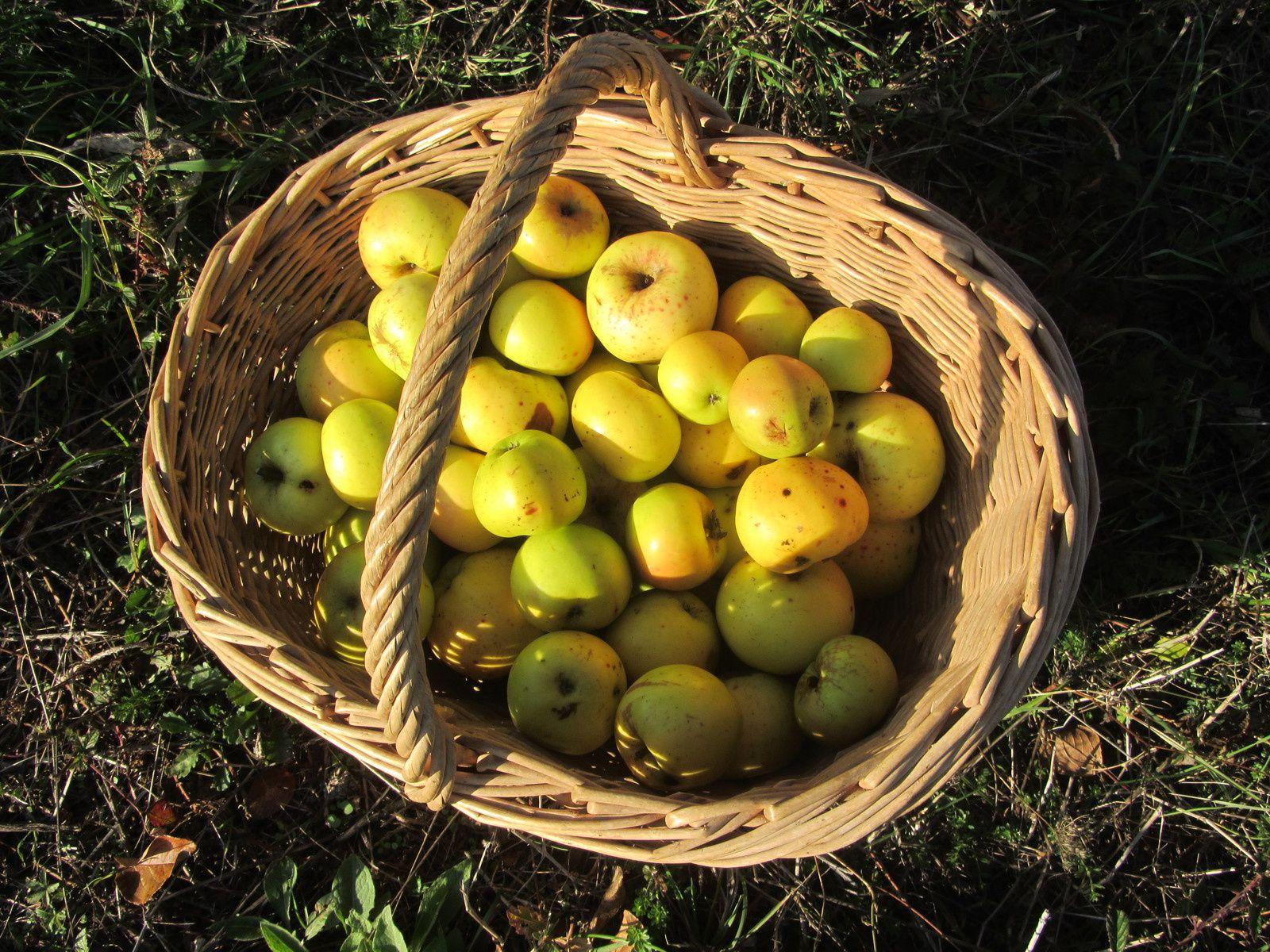 Puis de revenir le panier empli de pommes odorantes.