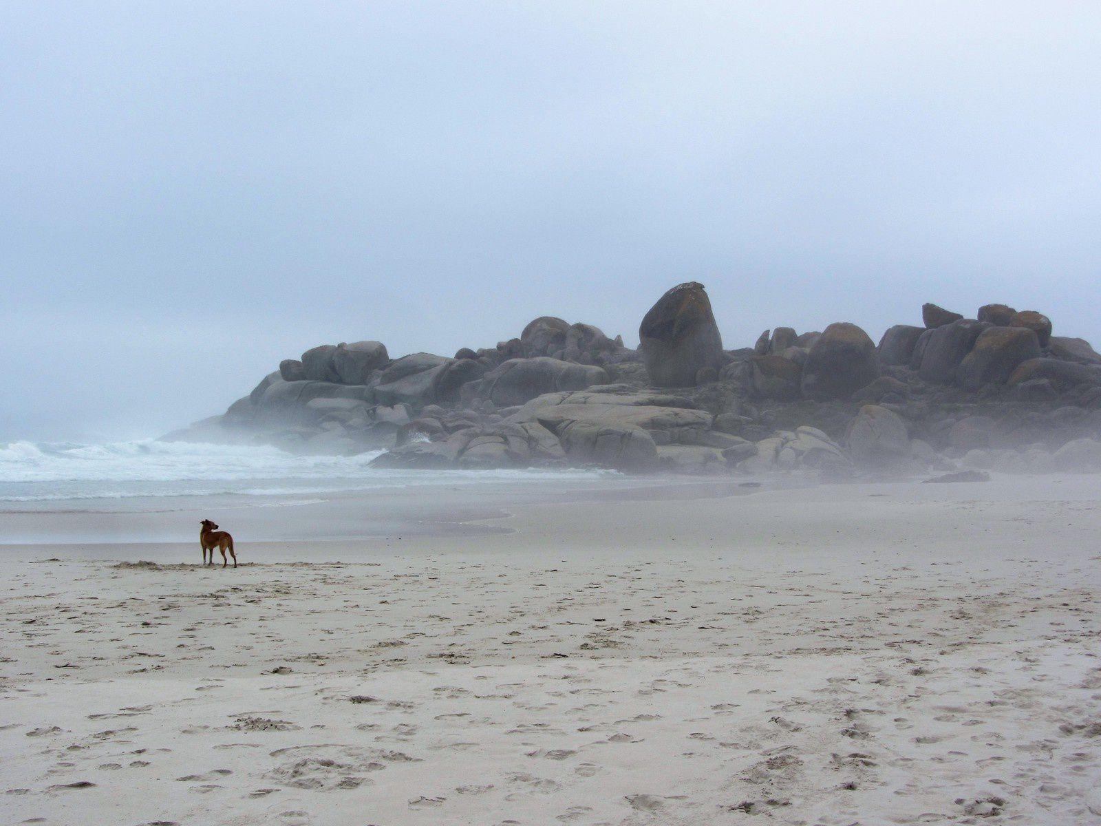 La brume qui tombait de minute en mnute n'a pas effrayé ce chien solitaire.