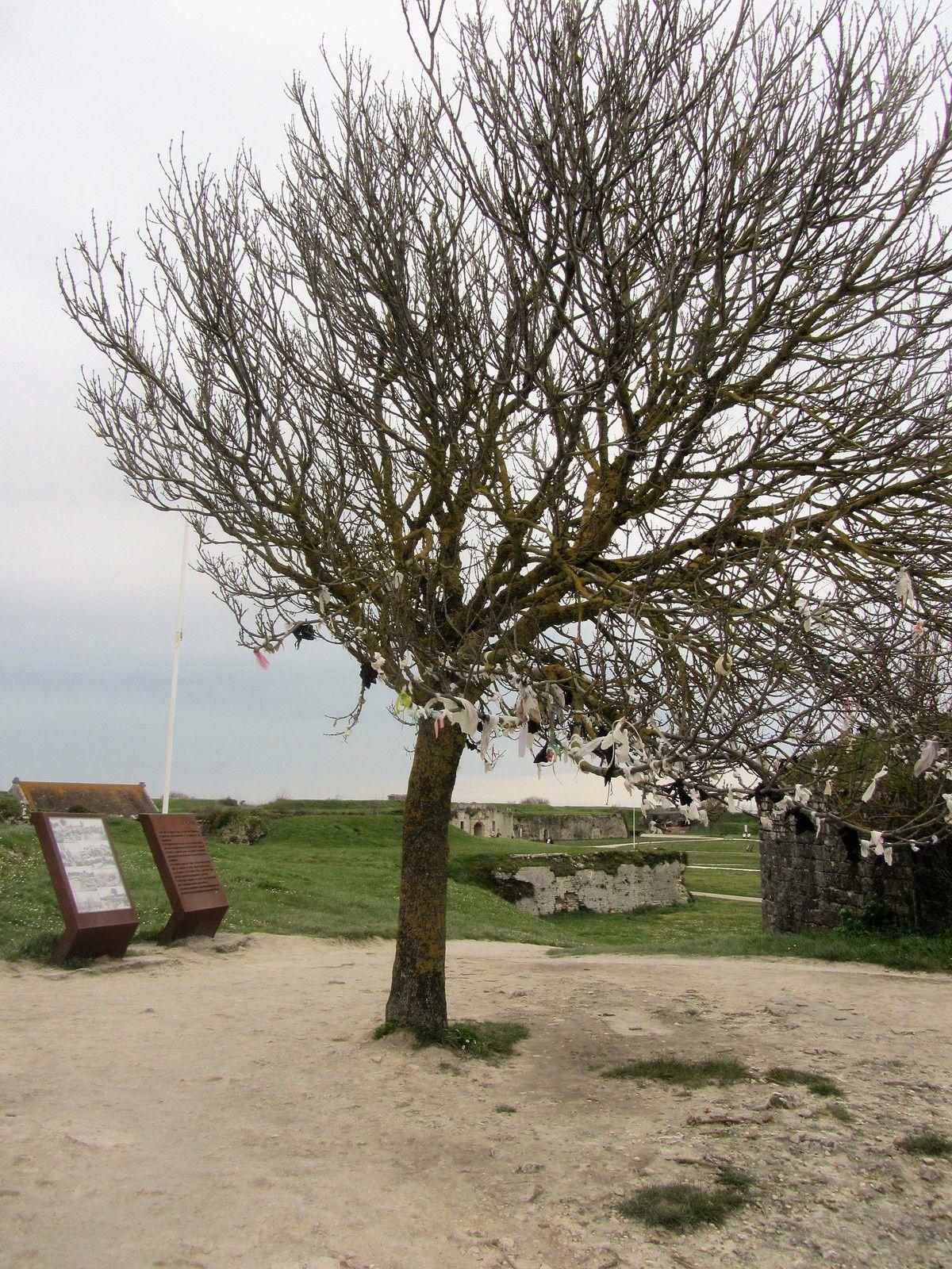 Sur la muraille de la citadelle, un arbre dénudé par l'hiver, mais vêtu par les habitants de l'île.