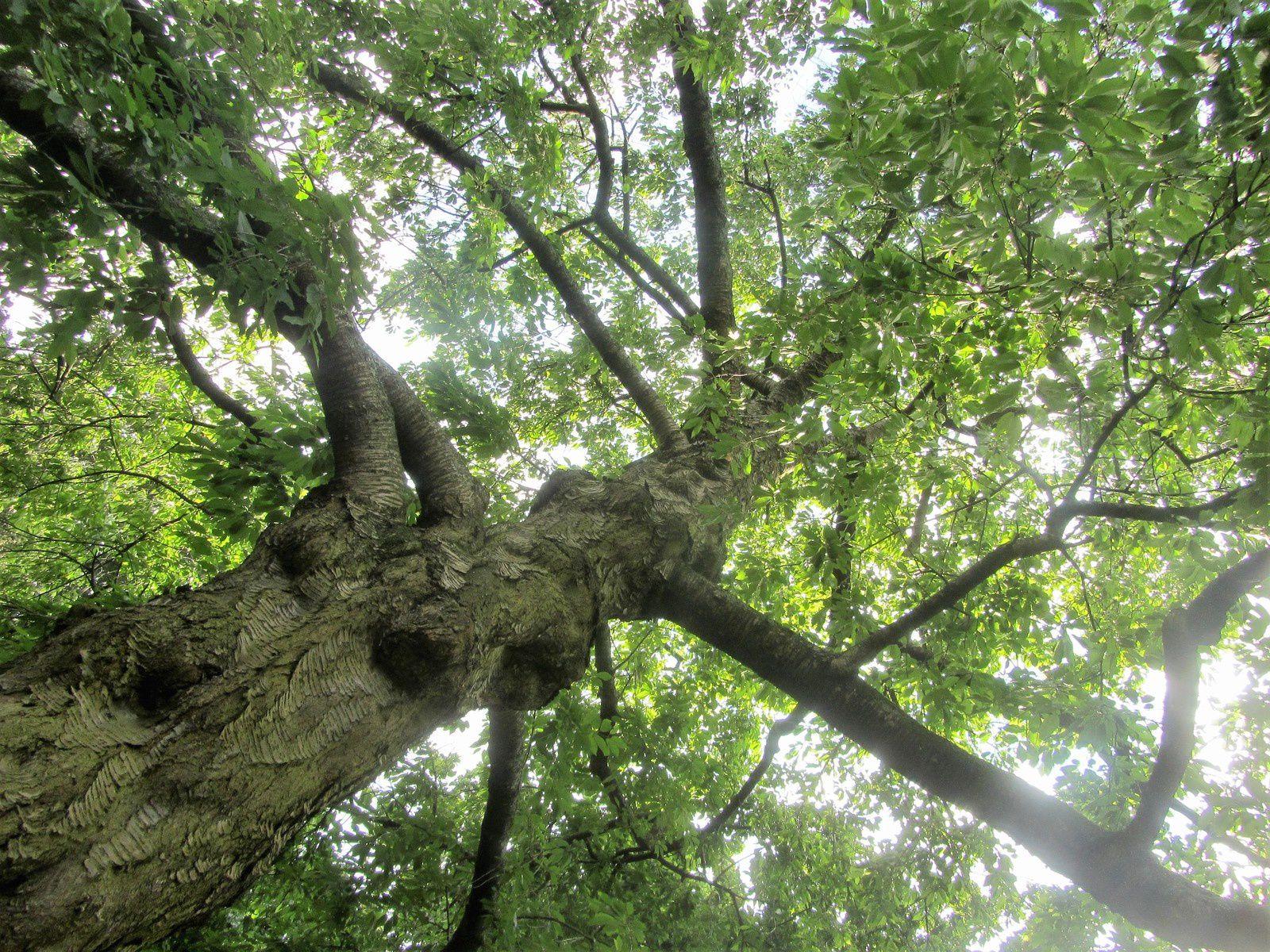 Chaque arbre a sa personnalité.
