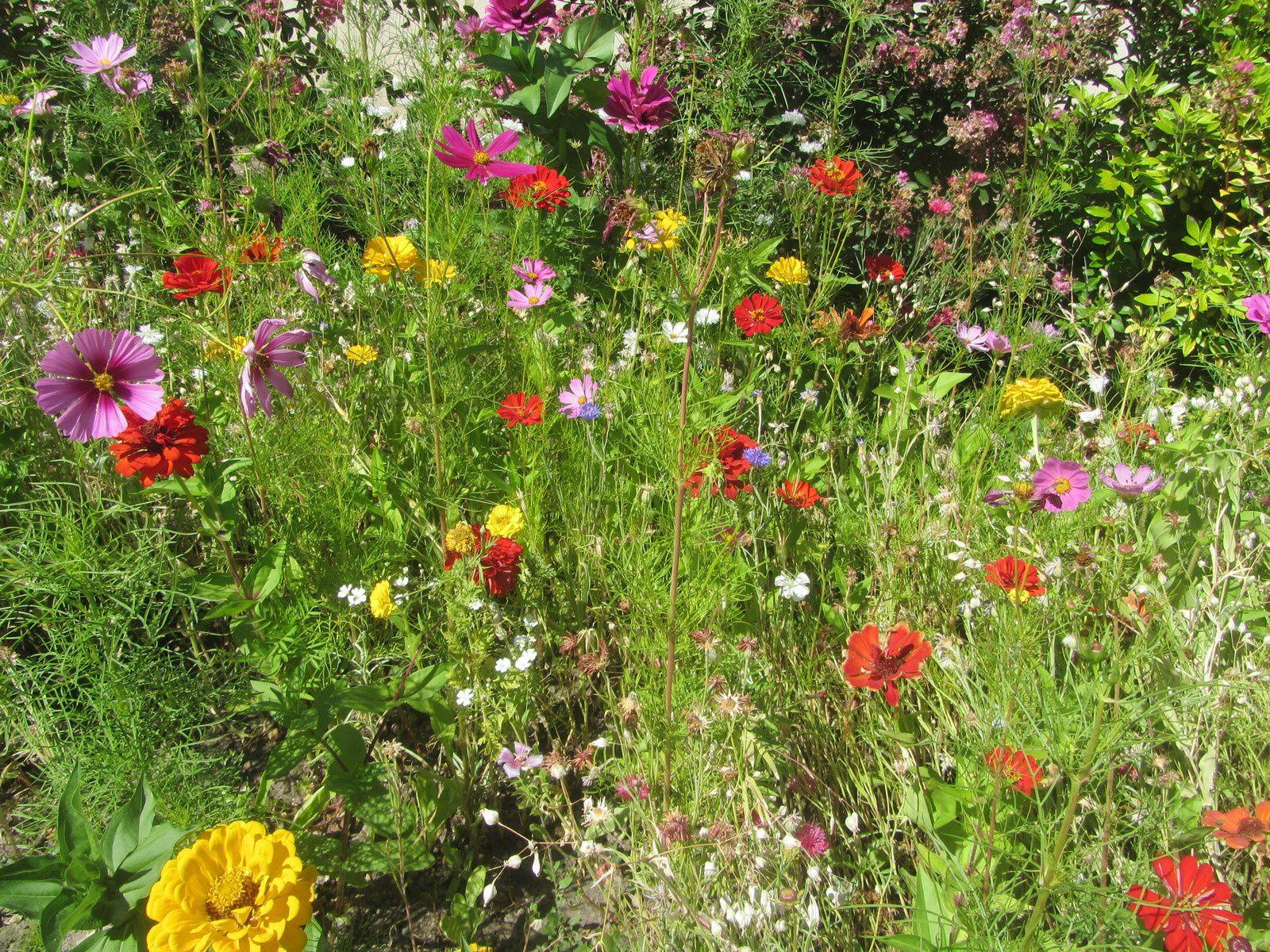 Ou peut être  par sureté, je semerai de ces tapis magiques, qui d'une poignée de graines , vous fait un parterre fleuri.
