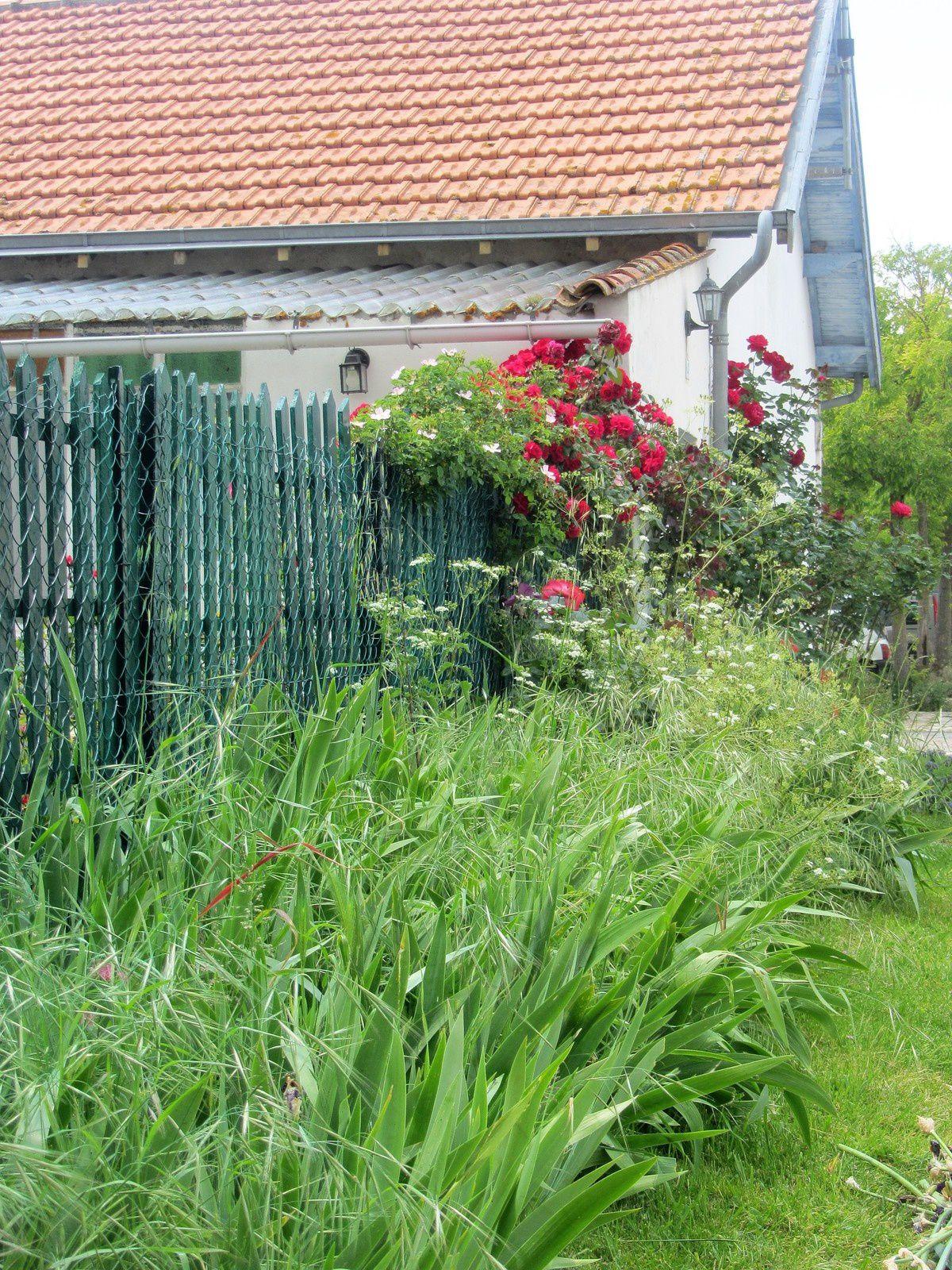 Dans le très beau village de Brouage à cette époque les fleurs sont reines.